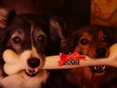 Despertar del Perro vídeo feliz Navidad
